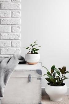 Scatola di legno bianca e giovani piante domestiche in vasi di fiori bianchi sul fondo bianco della parete. copia spazio