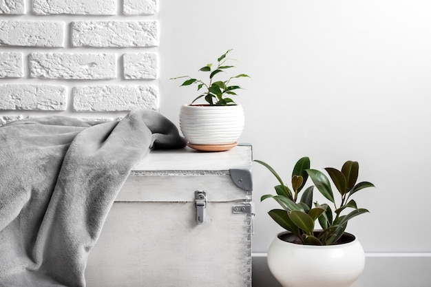 Scatola di legno bianca e giovani piante domestiche in vasi di fiori bianchi sul fondo bianco della parete.