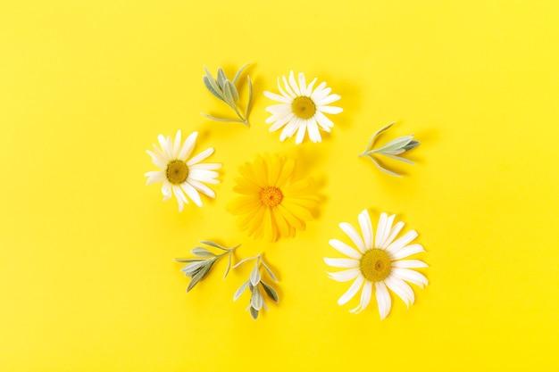 Fiori di camomilla bianchi e gialli su sfondo giallo. primavera, concetto estivo. disposizione piana, vista dall'alto, copia spazio