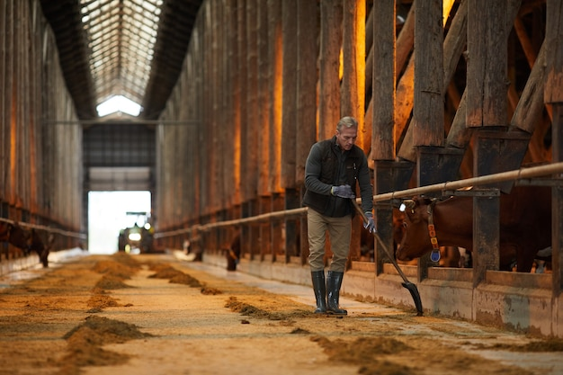 Ritratto grandangolare del lavoratore agricolo maturo che pulisce la stalla della mucca mentre lavora al ranch della famiglia, spazio della copia