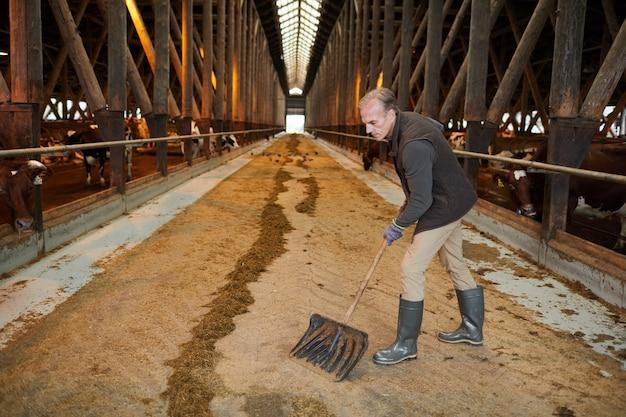 Vista laterale grandangolare al lavoratore agricolo maturo che pulisce la stalla della mucca mentre lavora al ranch della famiglia, spazio della copia