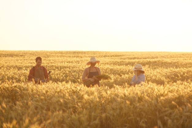 Ampio angolo di visione a tre persone che tengono grano mentre si cammina attraverso il campo dorato nella luce del tramonto, copia dello spazio
