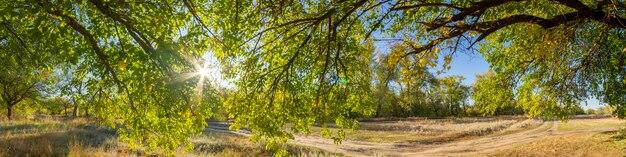Ampio panorama del paesaggio con alberi verdi, sole e cielo blu.