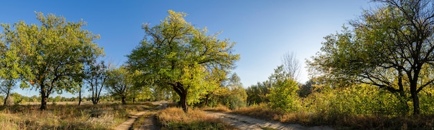 Ampio panorama del paesaggio con alberi verdi, sole, strada rurale e cielo blu.