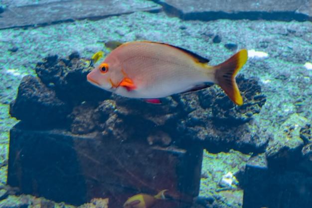 Un'ampia varietà di pesci (più di 500 specie di pesci, squali, coralli e crostacei) in un enorme acquario nell'hotel atlantis sull'isola di hainan. sanya, cina.