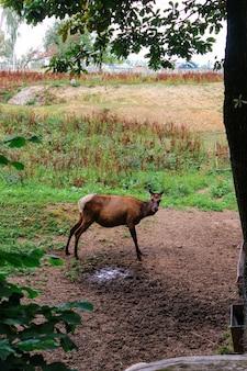 Animali selvatici nella foresta, nel prato, a caccia