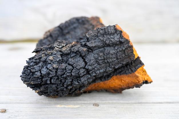 Fungo selvaggio dell'albero di betulla del fungo di chaga crudo su un fondo di legno