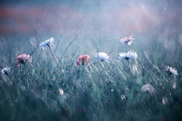 Fiore selvatico. piccoli fiori su un prato verde primavera.