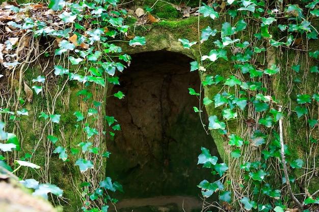 Grotta verde selvaggia
