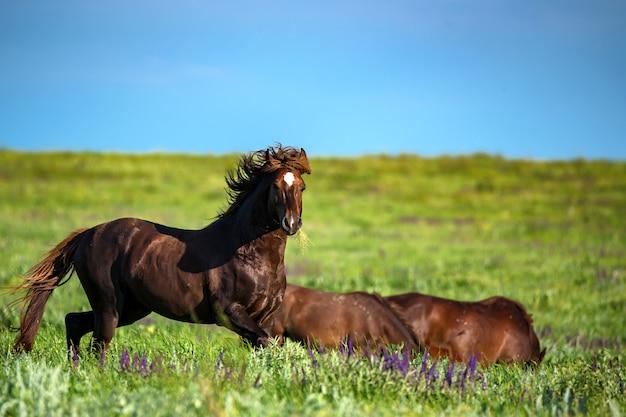 Cavalli selvaggi o mustang che pascono sul prato di estate