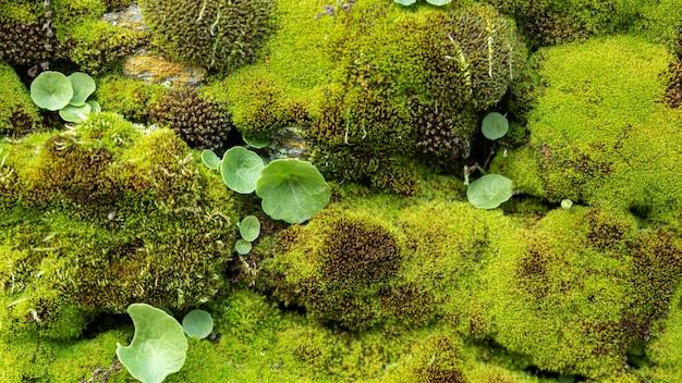 Muschio selvatico con piccole piante e roccia