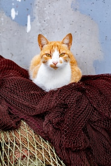 Gatto selvatico dai capelli rossi che riposa sulle reti da pesca