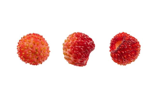 Bacche di fragole selvatiche pianta medicinale isolare su uno sfondo bianco