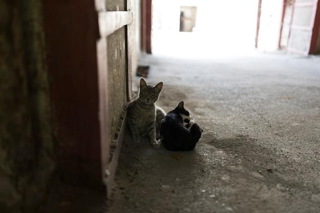 Gatti e cani randagi selvaggi per le strade della città. tbilisi, georgia. foto di alta qualità