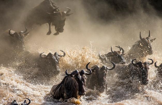 Gli gnu stanno attraversando il fiume mara. grande migrazione. kenya. tanzania. parco nazionale masai mara.