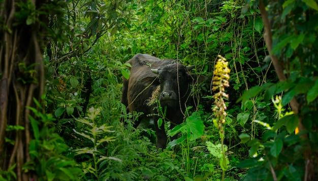 Giungla della fauna selvatica nel continente asiatico