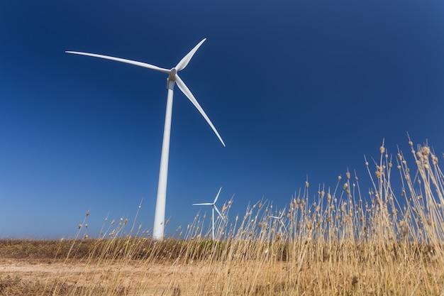 Generatori eolici, in basso, l'erba in primo piano.