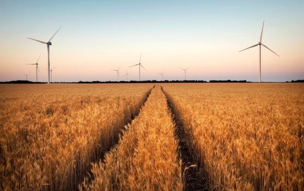 Turbine eoliche su un campo di grano maturo