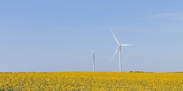 Paesaggio delle turbine eoliche