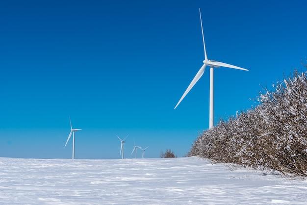 Le turbine di vento torreggiano sopra una fila di alberi coperti di gelo di orrore in un inverno di saskatchewan