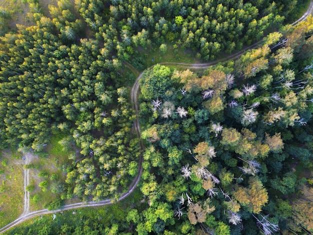 Una strada tortuosa attraverso la foresta. vista dall'alto dai droni da una vista a volo d'uccello.
