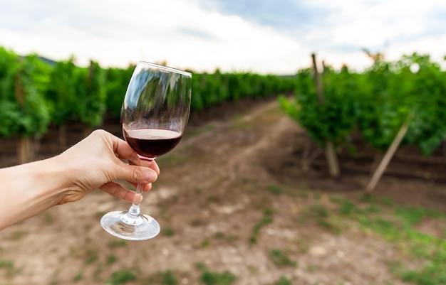 Il vignaiolo nella sua vigna odora e degusta un bicchiere di vino italiano o francese di alta qualità