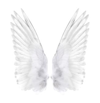 Ali di uccello isolate su bianco.