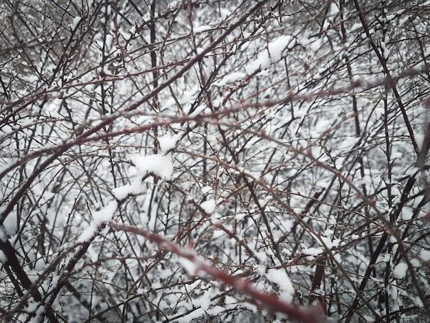 Rami invernali di alberi in brina su sfondo di neve e cielo bianco. sfondo invernale