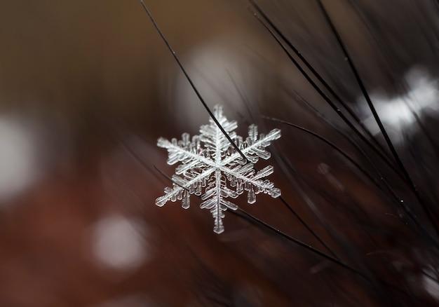 Carta invernale, cristalli di neve, foto invernale