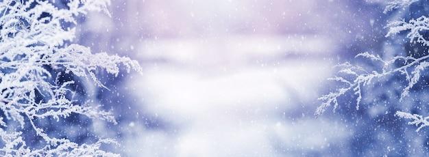 Sfondo natalizio invernale con neve coperta e piante di gelo nella foresta al mattino su un prato durante una nevicata
