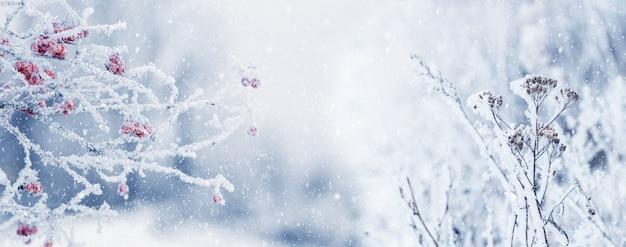 Sfondo natalizio invernale con cespuglio di viburno coperto di brina e vegetazione secca su sfondo sfocato durante la nevicata