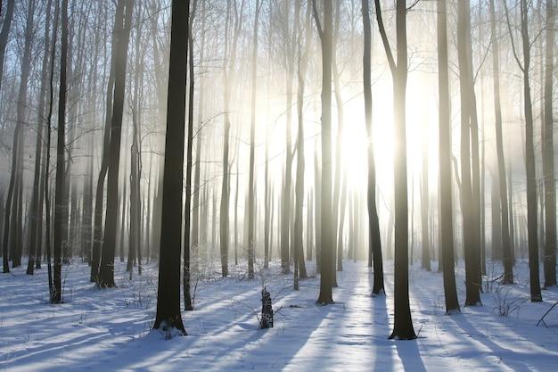 Foresta decidua invernale in una nebbiosa mattina di dicembre
