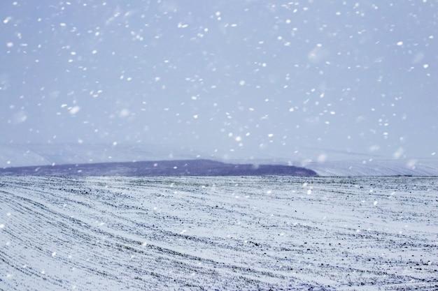 Campo invernale con foresta in lontananza durante la bufera di neve