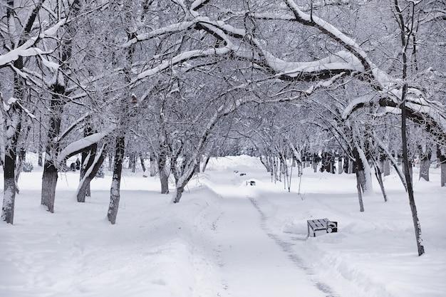 Paesaggio della foresta invernale. alti alberi sotto il manto nevoso. giorno gelido di gennaio nel parco.