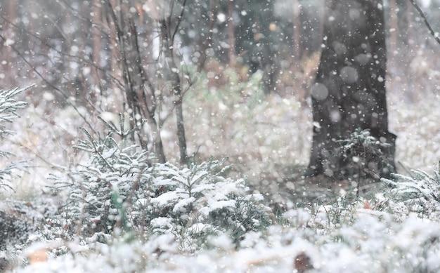 Foresta d'inverno. paesaggio della foresta invernale in una giornata di sole. alberi innevati e alberi di natale nella foresta. rami sotto la neve. giornata fredda con brutto tempo nevoso.