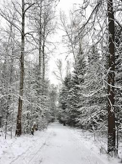Paesaggio forestale invernale con strada innevata attraverso gli abeti