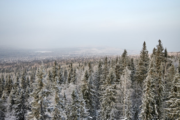Inverno nella foresta e nelle montagne. tutti gli alberi sono coperti di neve. abete rosso nella neve