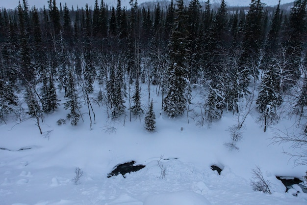 Foresta invernale avvolta nella neve. paesaggio notturno