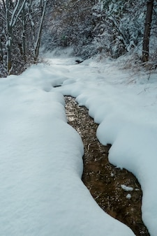 La foresta invernale sotto la neve con il fiume ghiacciato paesaggio stagionale