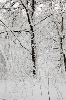 Foresta invernale con alberi senza fogliame