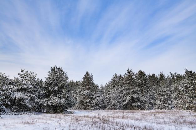 Fondo del paese delle meraviglie della foresta di inverno con gli abeti coperti di neve e cielo vibrante nuvoloso blu durante il giorno freddo