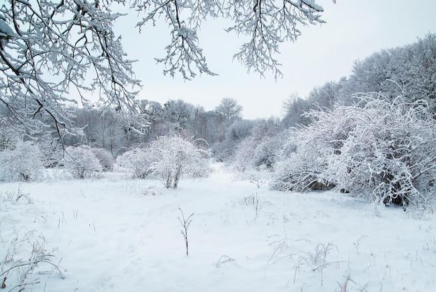 Foresta ghiacciata invernale con bellissimi alberi