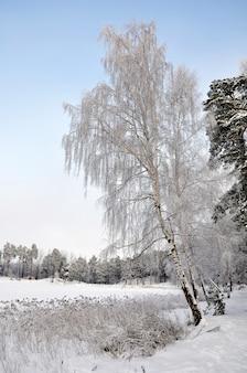 Lago invernale e foresta nella neve, lago babelitis. lettonia