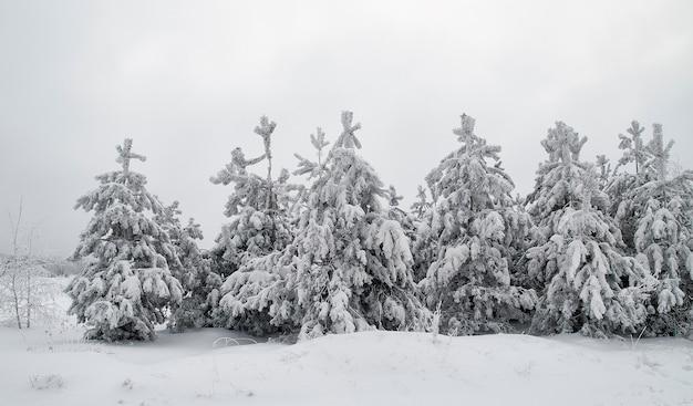 Paesaggio invernale. conifere coperte di neve nella foresta alberi di natale nel gelo