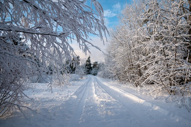 Paesaggio invernale la sera. strada nella foresta. derive. freddo