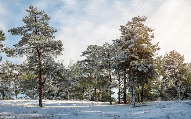 Paesaggio invernale. abeti coperti di neve.