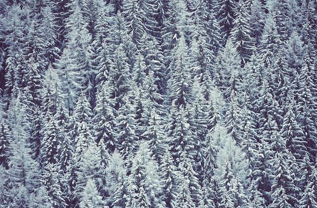 Paesaggio invernale nella foresta, vista panoramica, alpi, francia