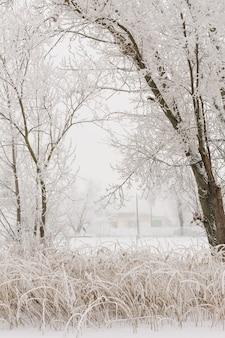Paesaggio invernale - alberi gelidi nella foresta innevata al mattino soleggiato. tranquilla natura invernale alla luce del sole.