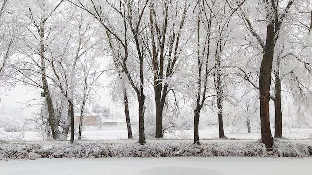 Paesaggio invernale - alberi gelidi nella foresta innevata al mattino soleggiato. tranquilla natura invernale