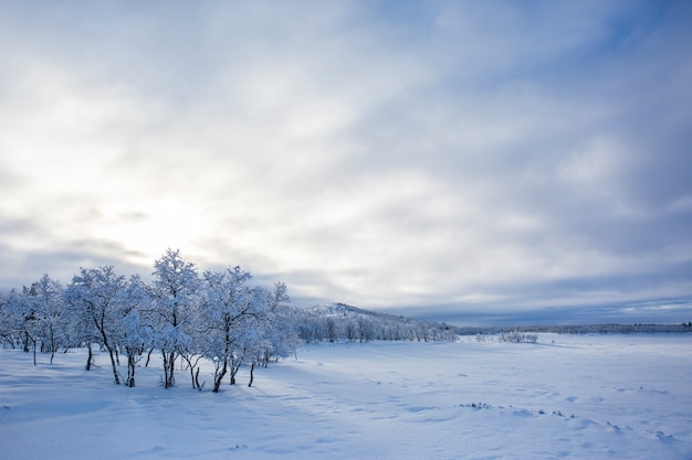 Paesaggio invernale a nuorgam, lapponia, finlandia
